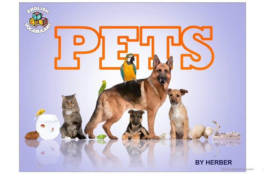 Animals – Pets